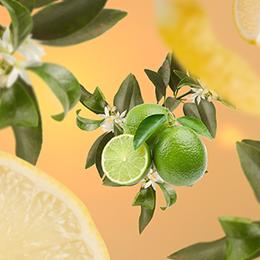 Fleur de Citronnier